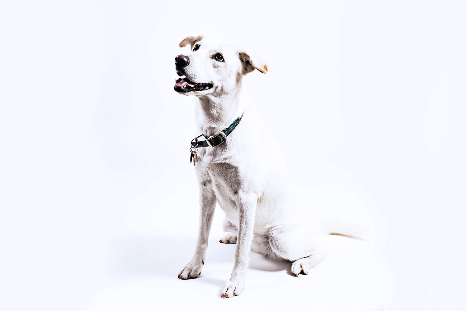 Slade Kemmet Media © Commercial Photography, Grand Avenue Vet Center, Saint Paul, Minnesota